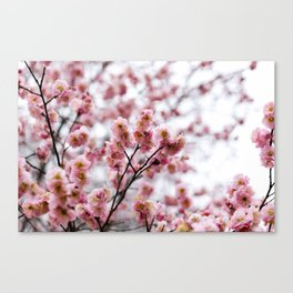 The First Bloom Canvas Print