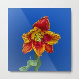 Flower tulip terry in spring Metal Print