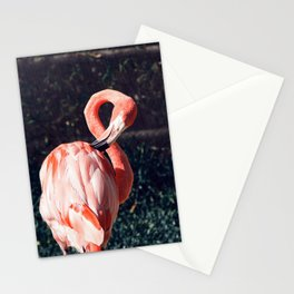 Flam Flam Stationery Cards
