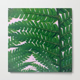 Fern Fronds Metal Print