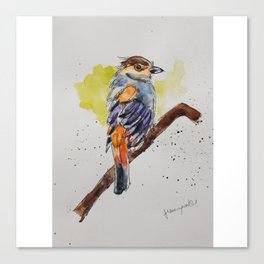 Silver-breasted Broadbill - in watercolor Canvas Print