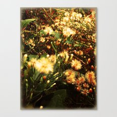 everything/dandelions Canvas Print