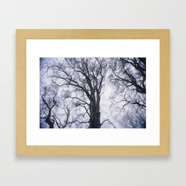 Look up at the Trees Framed Art Print