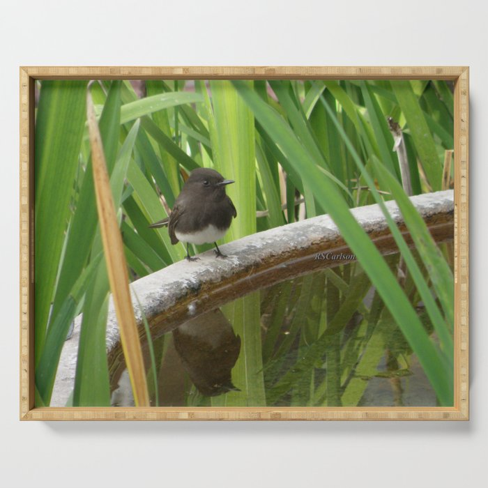Black Phoebe at the Fountain Serving Tray