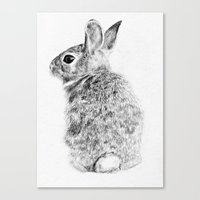 rabbit Canvas Prints featuring Rabbit by Anna Shell