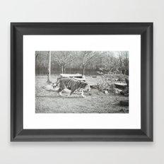 On the prowl... Framed Art Print