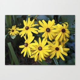 Garden Gold - Rudbeckia Canvas Print