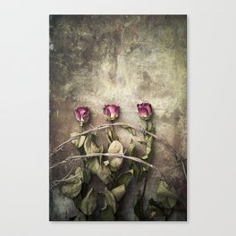 Three dried roses and barbed wire Canvas Print