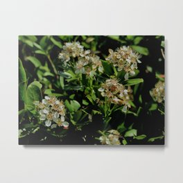 Stopping to Smell the Flowers at the Top of the Mountain Metal Print