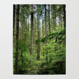 The Forrest Poster