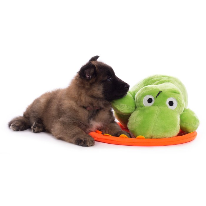 Puppy cuddling green toy Comforters