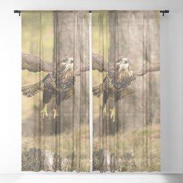 Common Buzzard Sheer Curtain