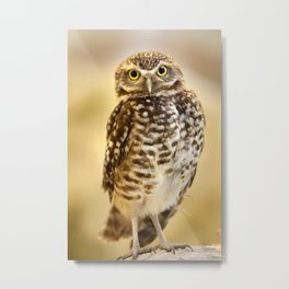 Burrowing Owl 1 Metal Print