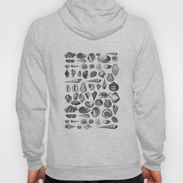 Vintage Sea Shell Drawing Black And White Hoody