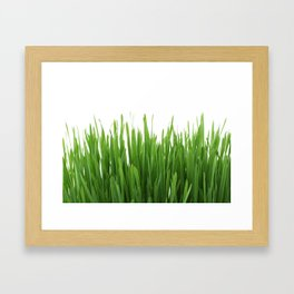 Long vertical green plants with white background Framed Art Print