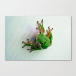 Green Tree Frog Canvas Print