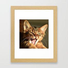 kitten yawn Framed Art Print