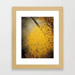 Ginkgo Fallen Framed Art Print