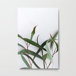 Eucalypts Metal Print