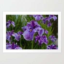 Garden Party (irises) Art Print