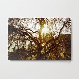 Tree see-through.... Metal Print