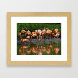 Flamingo Reflection Framed Art Print