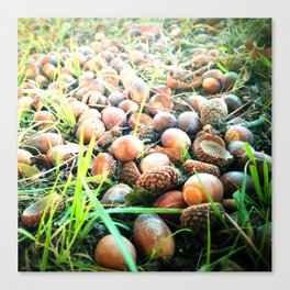 Don't go nuts! Canvas Print