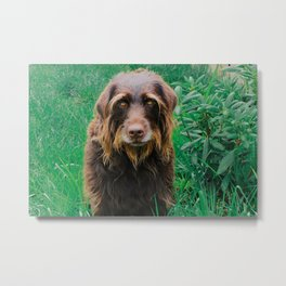 Blades of Grass Dogs 3 Metal Print