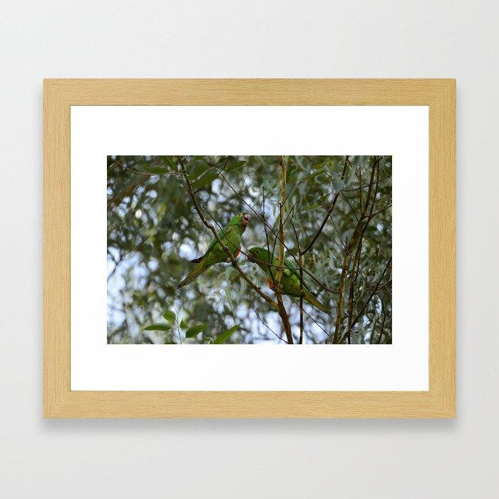 Parrots talking histories on trees Framed Art Print