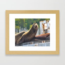 Sea Lion Framed Art Print