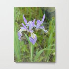 Wild Iris Photograph Metal Print