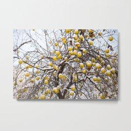 apples sag on tree in snow Metal Print
