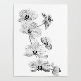Black white orchids, kitchen decor, illustration Poster