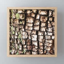 Ancient Juniper Bark Framed Mini Art Print