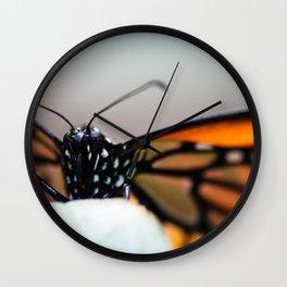 Monarch Danaus Plexippus Wall Clock
