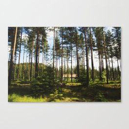 Norwegian Forest Canvas Print