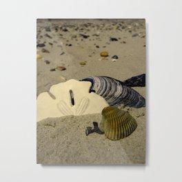 She sells seashells Metal Print