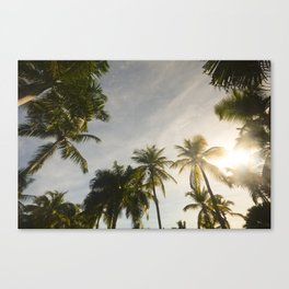 Palm Trees. Canvas Print