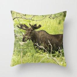 Bull Moose in Kincaid Park Throw Pillow
