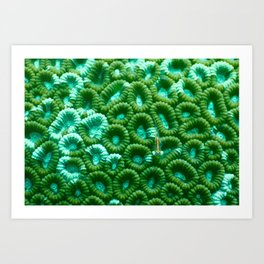 Upon the green circles of sponges rests a little fish Art Print