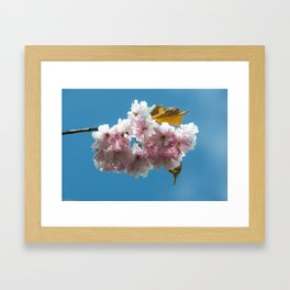 Cheery Blossom Up Close Framed Art Print