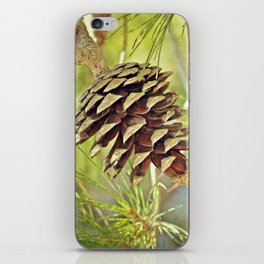 Pine Cone in the Sun iPhone Skin