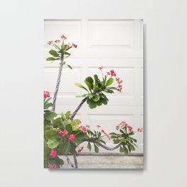 Blooming Crown of Thorns Metal Print
