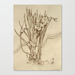 Narcissus and Echo  Canvas Print