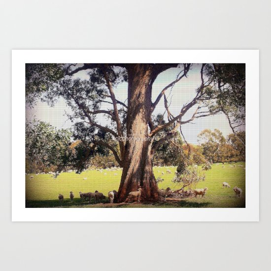 Under the shade of a coolabah Tree Art Print
