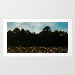 Cotton Field Art Print