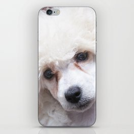The Innocence of a Puppy iPhone Skin
