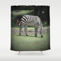 zebra Shower Curtains featuring Zebra by BeachStudio