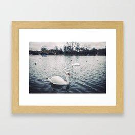 Calm on The Serpentine Framed Art Print