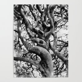 Twisted And Gnarled Poster